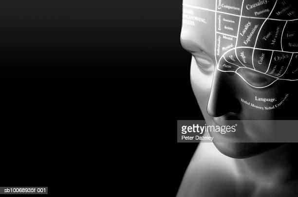 Phrenology head, close up