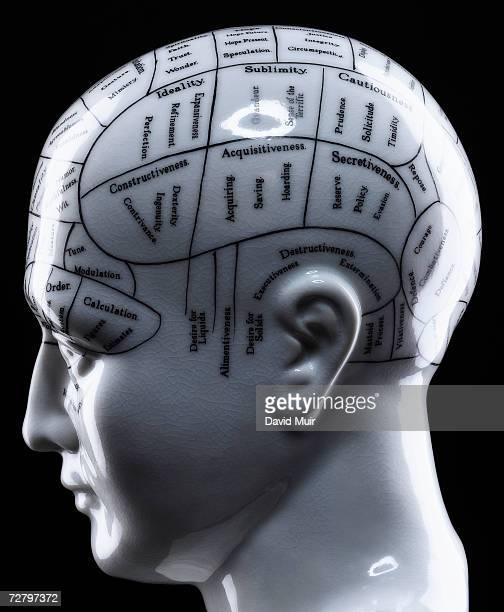 Phrenology head, close-up