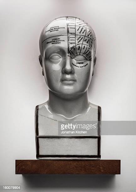 Phrenology Head facing camera