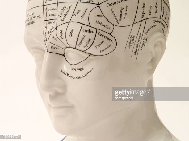 Phrenology Head from left