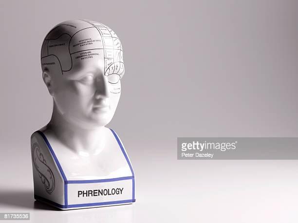 Phrenology head human representation of male head