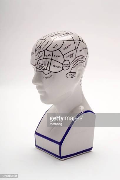 Phrenologie-Schädelmodell
