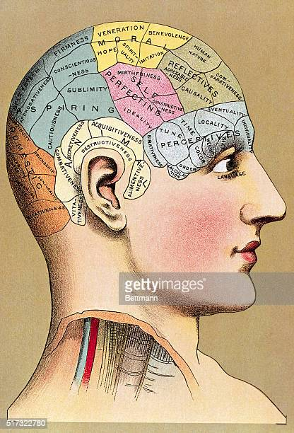 Phrenology head with regions of human capacities Undated colored lithograph