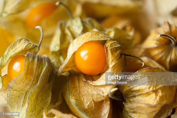 physalis, full frame - chinese lantern stock pictures, royalty-free photos & images