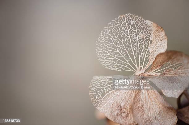 physalis husk - bladnerf stockfoto's en -beelden