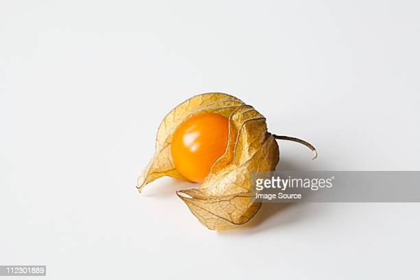 physalis on white background - chinese lantern stock pictures, royalty-free photos & images