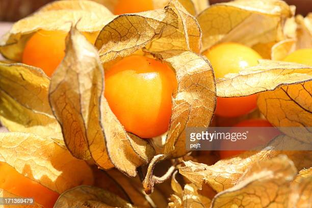physalis peruviana - pejft stock pictures, royalty-free photos & images