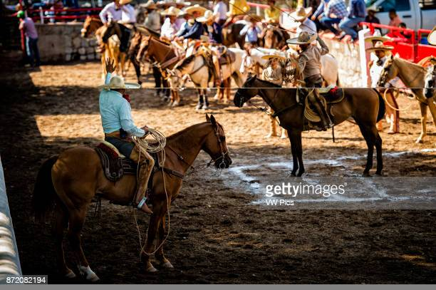 Piales en Lienzo a horseman must throw a rope let a horse run through the loop catching it by the hind legs