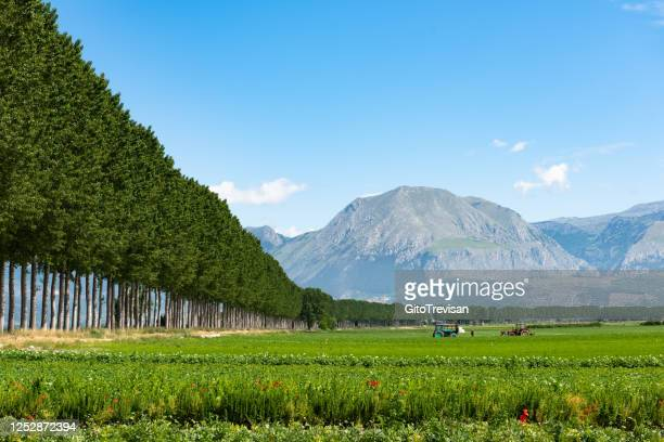 piana del fucino - vegetable crops - abruzzi stock pictures, royalty-free photos & images