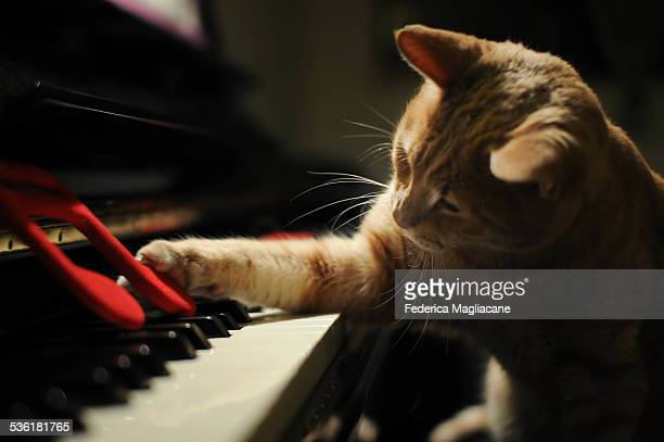 piano cat - keyboard player stock photos and pictures