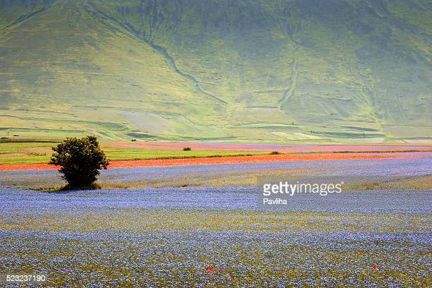 piano grande di castelluccio, village on a green hill,italy - umbria stock pictures, royalty-free photos & images
