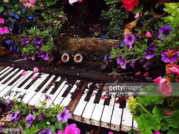 piano shaped bench surrounded with petunia flowers at covent garden - covent garden - fotografias e filmes do acervo