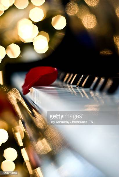 Piano With Rose Petal and Bokeh