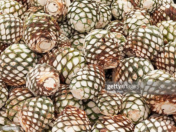 Piñas for Tequila Production