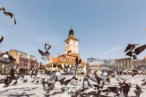 Piata Sfatului (Sfatului Square) with flying pigeons on a sunny summer day, Brasov, Transylvania, Romania