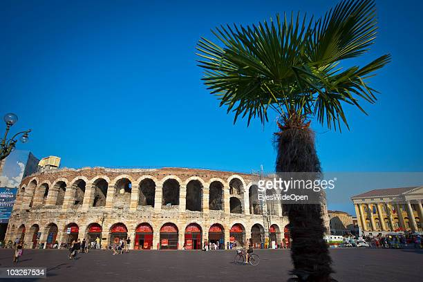 Piazza Bra and the Arena of Verona with a palm tree on July 14 2010 in Verona Italy The famous Arena di Verona is popular for the annual opera...