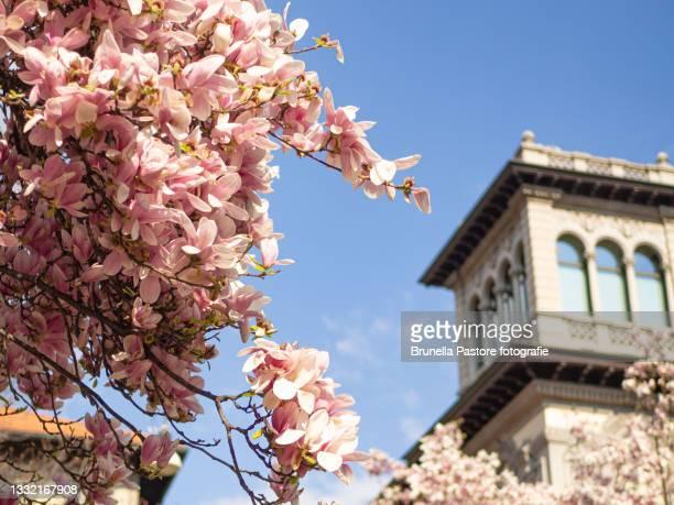 piazza tommaseo - milano - brunella pastore imagens e fotografias de stock
