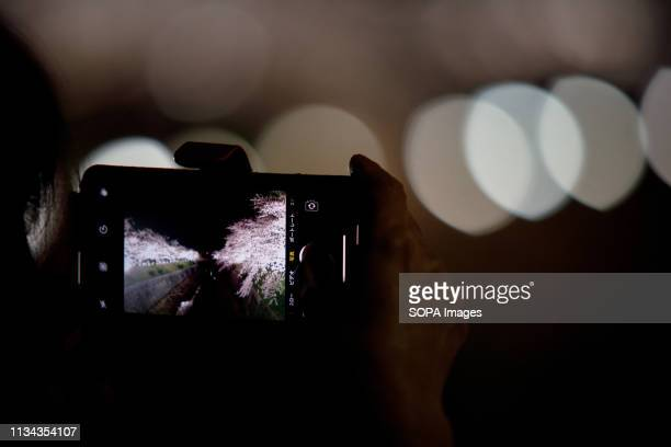 A pic of cherry blossoms seen on a phone at yamazaki river nagoya Aichi prefecture Japan The Cherry blossom also known as Sakura in Japan normally...