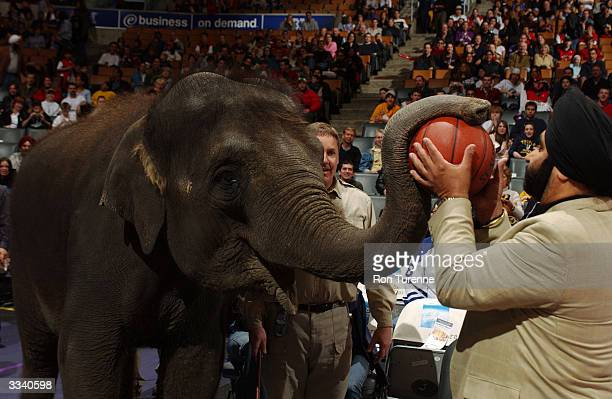 Piccolo the Elephant presents Nav the SuperFan with the game ball in honour of Baisakhi Day before the Toronto Raptors game versus the Chicago Bulls...