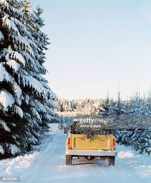 pick up truck with pine tree on back - country christmas stock pictures, royalty-free photos & images