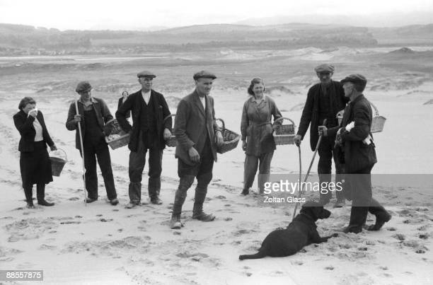 Pickers collecting seagull eggs on a desolate stretch of sand dunes off the Cumbrian Coast June 1941 Original Publication Picture Post 787 The Gulls'...