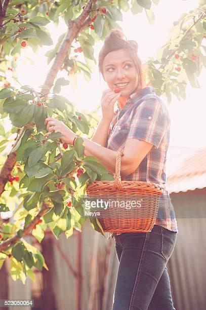Pflücken Cherries-englische Redewendung