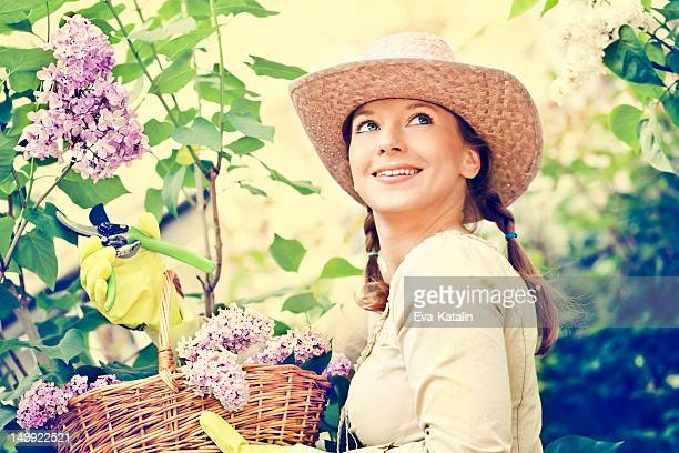 picking flowers - purple lilac stock pictures, royalty-free photos & images