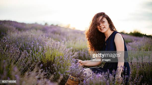 Picking lavender in sunset