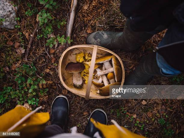 picking mushrooms in the woods - basket stock photos and pictures