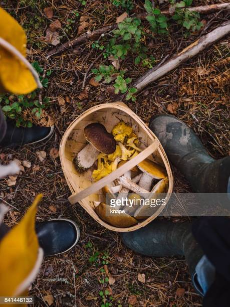picking mushrooms in the woods - edible mushroom stock pictures, royalty-free photos & images
