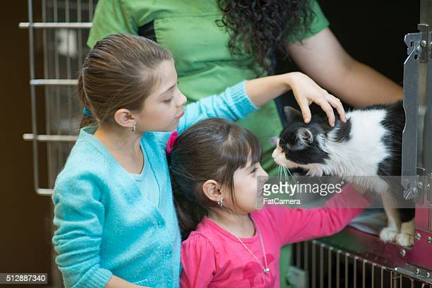 Picking Out a Cat at the Pound