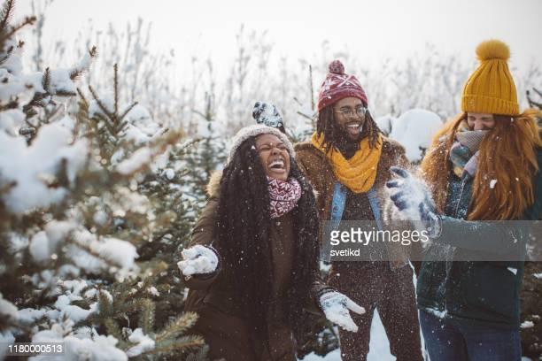 完璧なクリスマスのための右の木を選ぶ - 期間限定ショップ ストックフォトと画像
