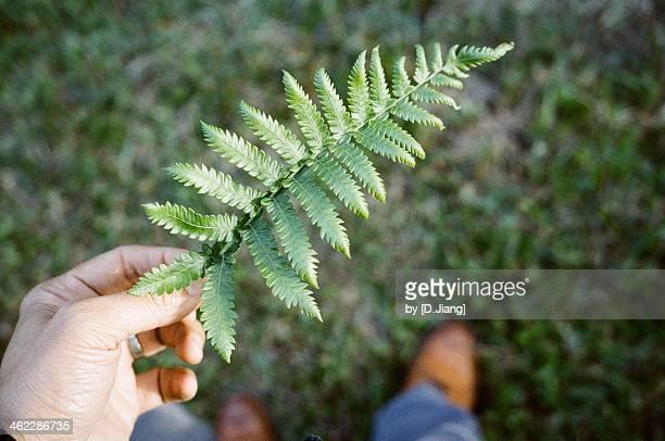 Picking up a leaf