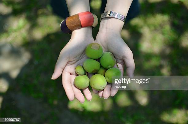 Picking up the fallen ume