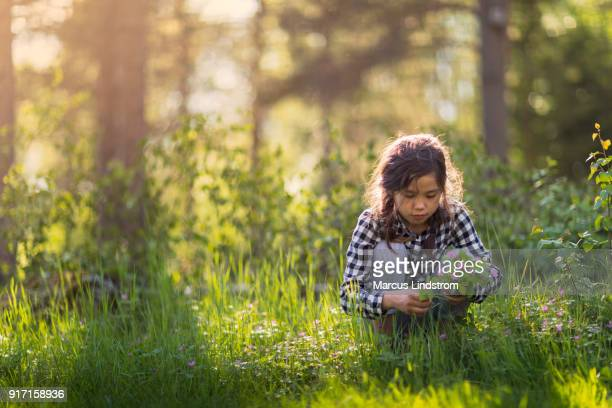 picking wildflowers - mazzi fiori di campo foto e immagini stock