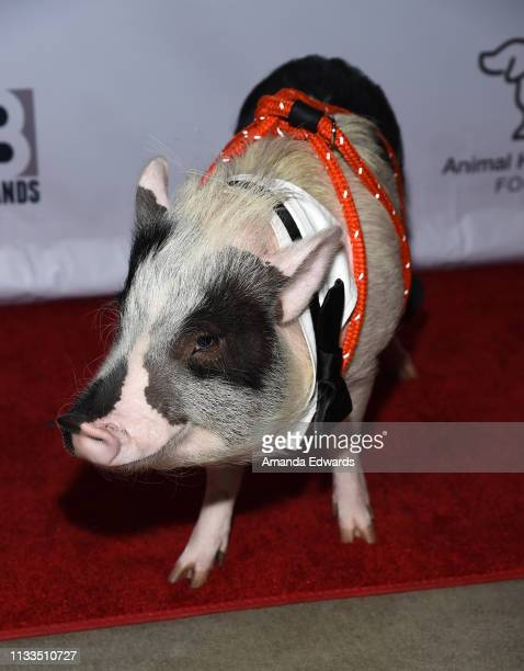 Pickles the Pig attends The Animal Hope Wellness Foundation's 2nd Annual Compassion Gala at Playa Studios on March 03 2019 in Culver City California