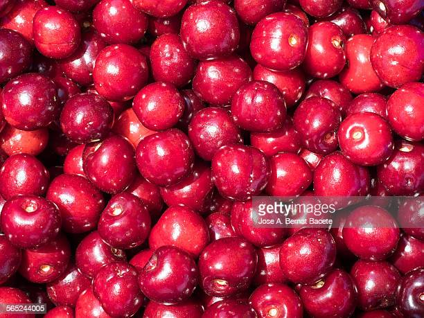 picks cherries harvested ecologically - pillory stock pictures, royalty-free photos & images
