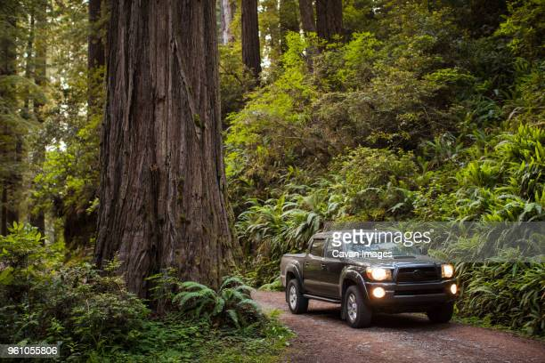 Pick-up truck on dirt road amidst forest at Redwood National and State Parks