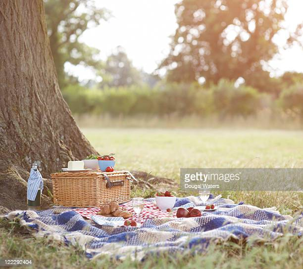 picnic and hamper beside tree in meadow. - picknick stock-fotos und bilder