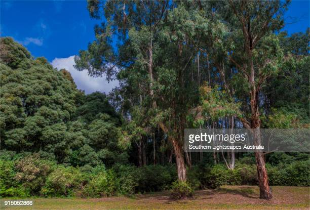 Picnic area and lawns at the Tarra Bulga National Park, South Gippsland, Victoria.