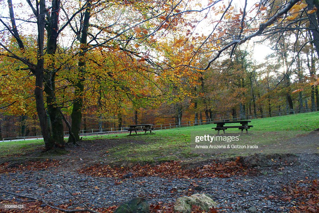 Picnic area in Leitzalarrea (Navarre) : Foto stock