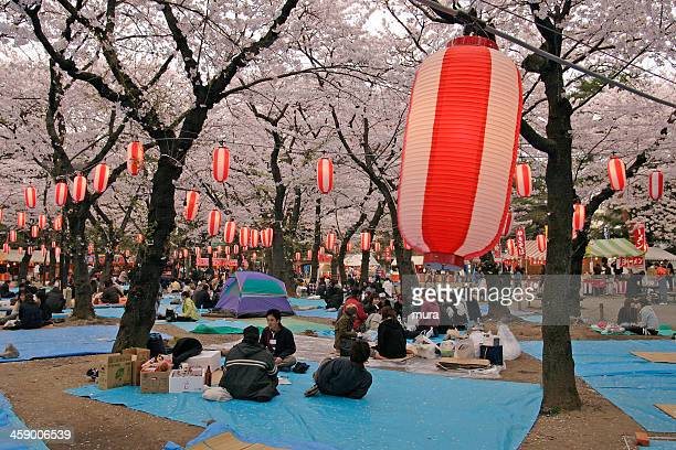 picnic at cherry blossom festival - hanami stock pictures, royalty-free photos & images