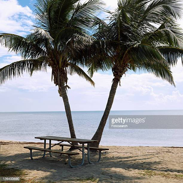 picnic table by pair of palm trees on beach in florida keys, florida, usa. - mexican picnic stock pictures, royalty-free photos & images