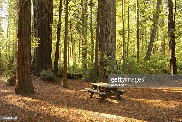 picnic table in campground, redwood national park - picnic table stock pictures, royalty-free photos & images