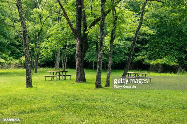 picnic tables at park - gras stock pictures, royalty-free photos & images