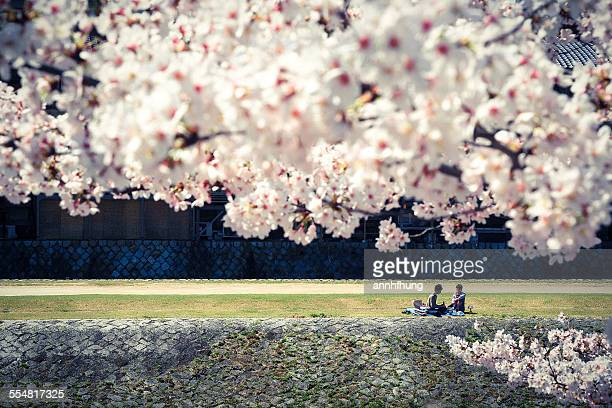 Picnic under Cherry Blossoms