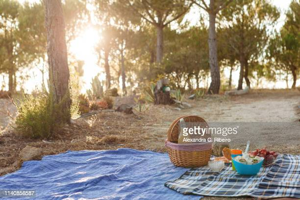 picnic under trees - picnic blanket stock pictures, royalty-free photos & images