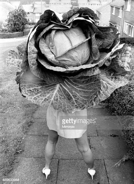 A picture from a series of humurous novelty images taken by Sunday People photographer Dennis Hutchinson When Ruth's mum sent her for a cabbage for...