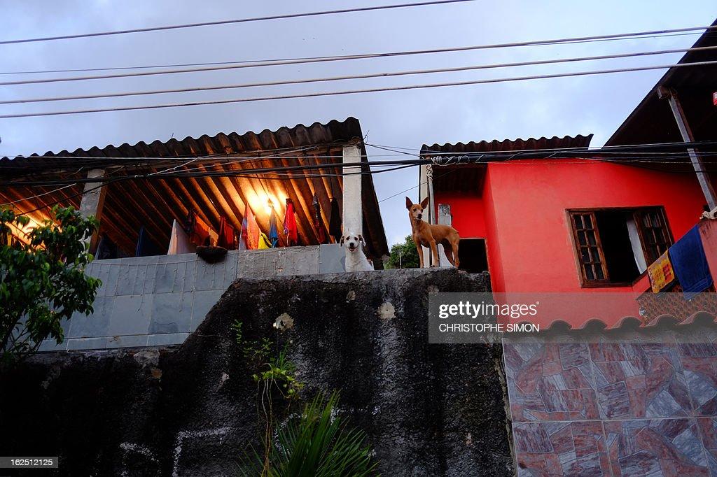 Picture od two dogs taken at Rio de Janeiro's Cidade de Deus shantytown, in Brazil, on February 23, 2013. AFP PHOTO/Christophe Simon