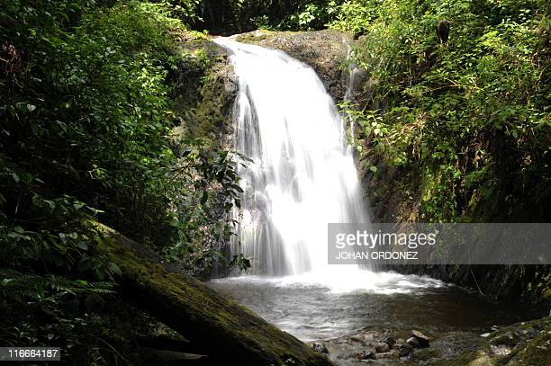 Picture of a cascade at Montecristo Hill in Trifinio a biosphere reserve shared by Salvador Guatemala and Honduras in the municipality of Concepcion...